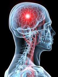 brain-robert-berezin